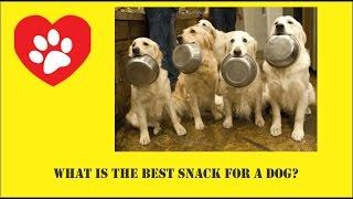 Top 5 loại thức ăn nhẹ tốt nhất cho chó mèo