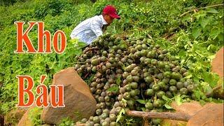 Chinh Phục Kho Báu Trong Rừng Sâu - Hái Quả Dừa Rừng - Tập 1