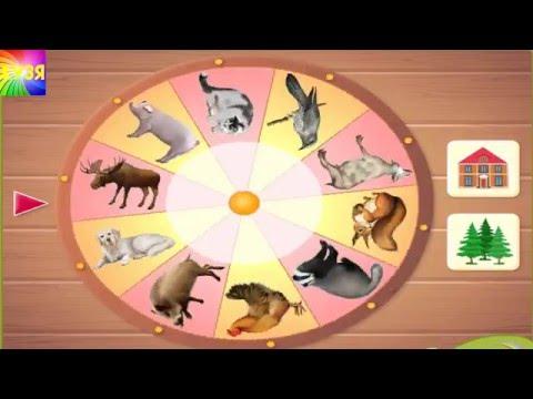 Учим животных