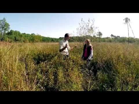 Landes : sauvegarde des zones humides