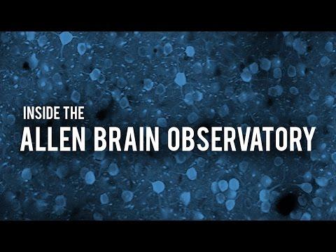 Inside the Allen Brain Observatory