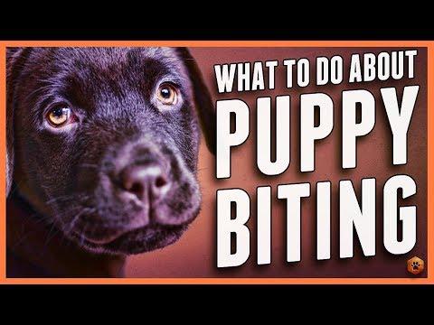 Puppy Biting - Learn Puppy Bite Inhibition Training
