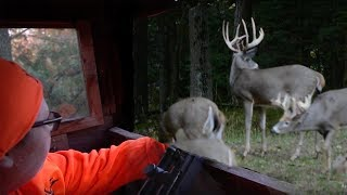Youth Deer Hunting In Wisconsin