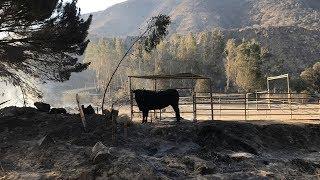 Sylmar animal ranch ravaged in Creek Fire