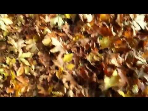 A walk in the autumn leaves (2014)