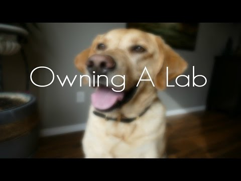 Owning A Lab