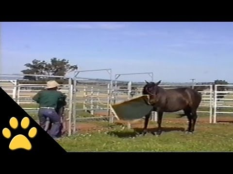 Koń-łobuziak, który nie kocha właściciela