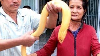 Chuyện lạ có thật: lươn khổng lồ hóa rồng ở Long An