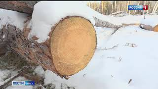 К мошенничеству с заготовкой дерева на севере региона может быть причастен лесхоз