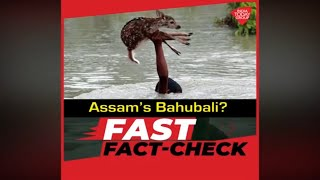 Viral pics of Assam's 'Bahaubali', fact check..