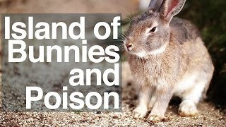 Island of Bunnies and Poison - Ōkunoshima documentary