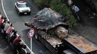 18 Abnormally Large Animals That Are Actually Real
