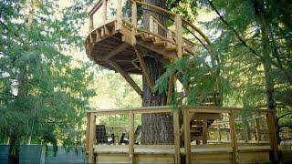 أخبار منوعة | مايكروسوفت تبنى مكاتب جديدة لموظفيها على الأشجار ...