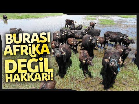 Yüksekova'da Afrika'yı Andıran Belgesel Tadında Görüntüler