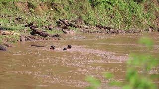 Tin lũ lụt mới nhất: Trẻ em liều mình vớt củi giữa dòng nước lũ