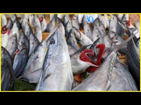Uzmanlar uyarıyor: Esmer etli balıklara dikkat! İşte semptomlar...