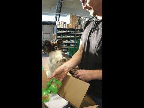 Alfie er danmarks første vingummibamsehund. På job hos Greenline.dk