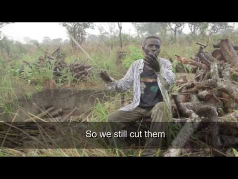 REDD+ and the future of African Forests