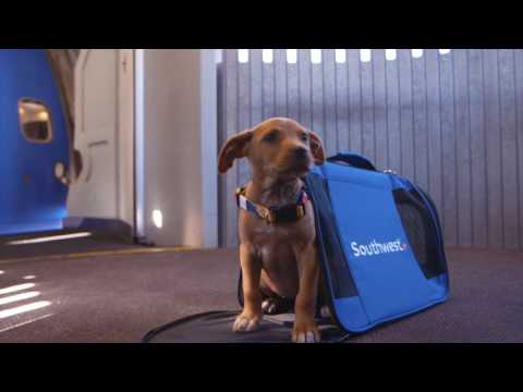 Southwest Airlines Flies Pups to the Puppy Bowl