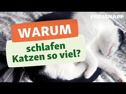 Warum schlafen Katzen so viel?