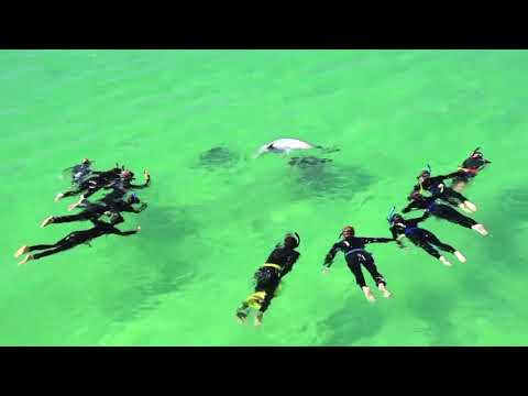 video Swim with Wild Dolphins (Meet The Boat in Rockingham)