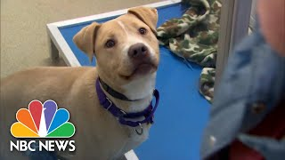 Chocolate, Sleeping In, And Shelter Dogs | NBC News For Universal Kids
