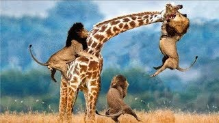 LIVE: AMAZING Moments Of Animal Fight Battle - Discovery Wild Animal Planet 2018