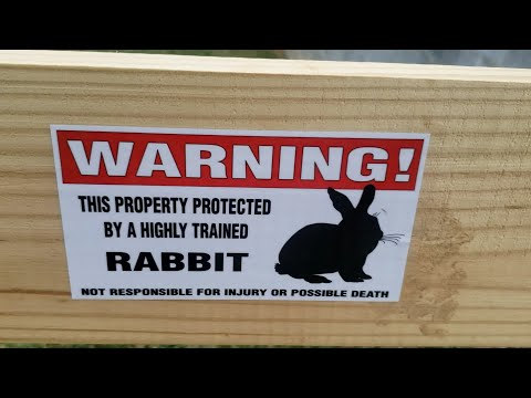 Attack Rabbits and Tiny Raptors