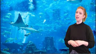 25 BIZARRE & Strange Sea Creature Behavior