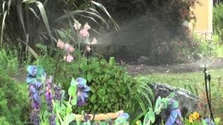 Ein Dor Mini Sprinklers In Action
