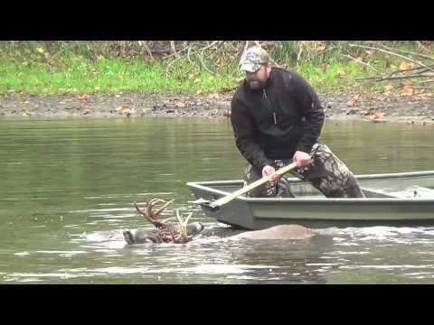 Veterinari spašavaju jelene iz vode