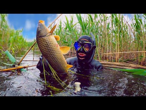 Невероятные Приключения в Астрахани. Подводная Охота. Ядовитые Змеи. Рыбалка