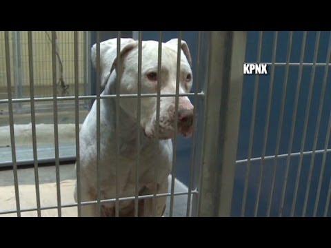 50,000+ back dog that mauled kid