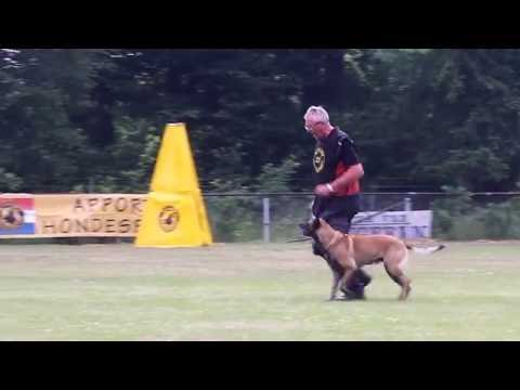 A Nolles Jacco vh Groot Wezenland Obedience 74 P.