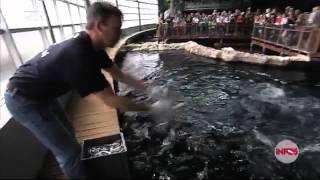 Reportage requin de la panne en belgique
