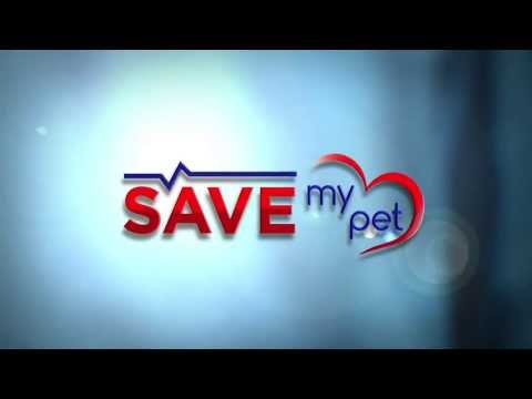 Save My Pet Trailer