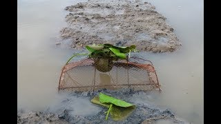 Đặt lờ chặn bắt cá mùa nước lũ rút dính thấy mà ham  Catch fish in Vietnam countryside
