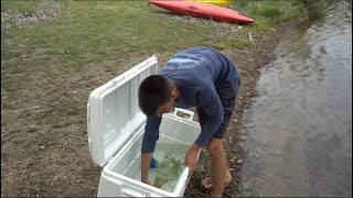 Releasing Our VICIOUS Pet Fish - His Forever Home!!