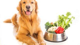 Thức Ăn Cho Chó Tốt Nhất