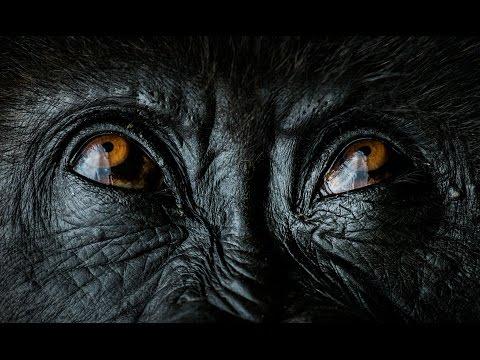 Nelis Wolmarans  - Wildlife Photography Guide