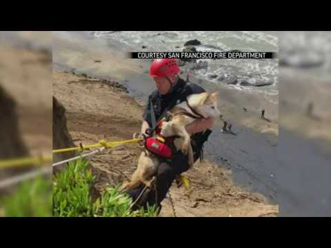 Raw: Calif. Firefighters Rescue Dog from Cliff