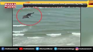 Viral video: Bird flies over beach, picks up baby Shark fr..