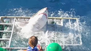 10 Shark Diving Gone Wrong