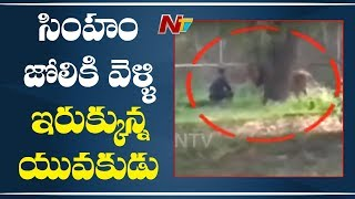 Shocking: A Man Gets Inside Lion Enclosure And Takes Selfi..