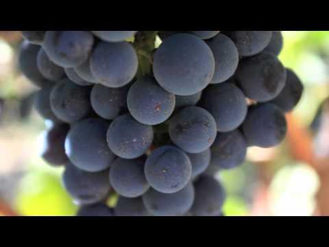 2010 IM harvest wrap
