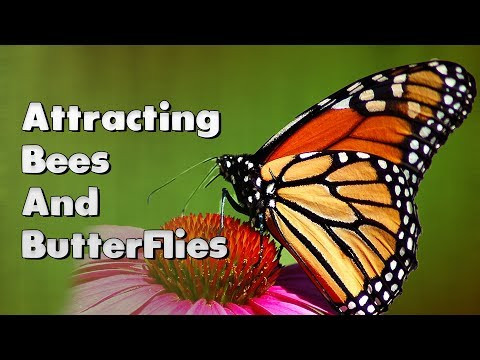 How I Designed My Homestead To Attract Bees & Butterflies