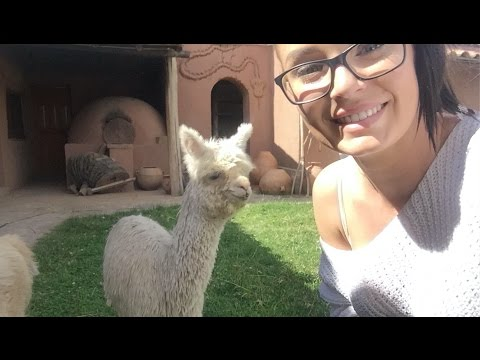 CONTIKI TRAVEL VLOG! White Water Rafting, Baby Llamas & Maccu Picchu in Peru