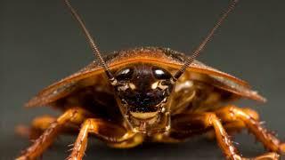 La Señora Cucaracha - Las Canciones de la Granja de Zenón 1
