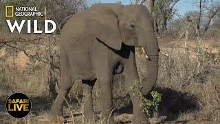 Safari Live - Day 259 | Nat Geo Wild