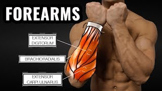 The Best Science-Based Forearm Workout for Size and Strength